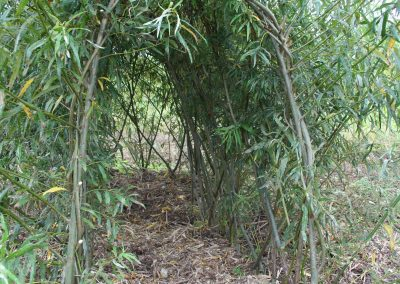 Looking into a living willow dome through the attached mini tunnel