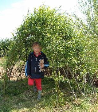 Living Willow Small Dome Kit at Willows Nursery