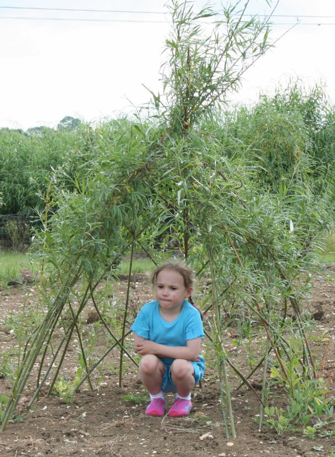 Small Living Willow Wigwam Kit