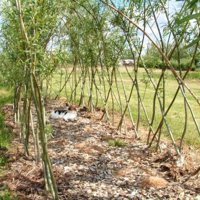One of first living willow tunnels planted at the Nursery in 2001.