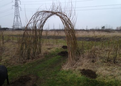 A living willow archway/short tunnel at Willows Nursery.