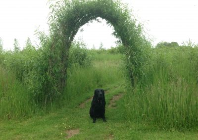 Buy. A living willow archway/short tunnel at Willows Nursery.