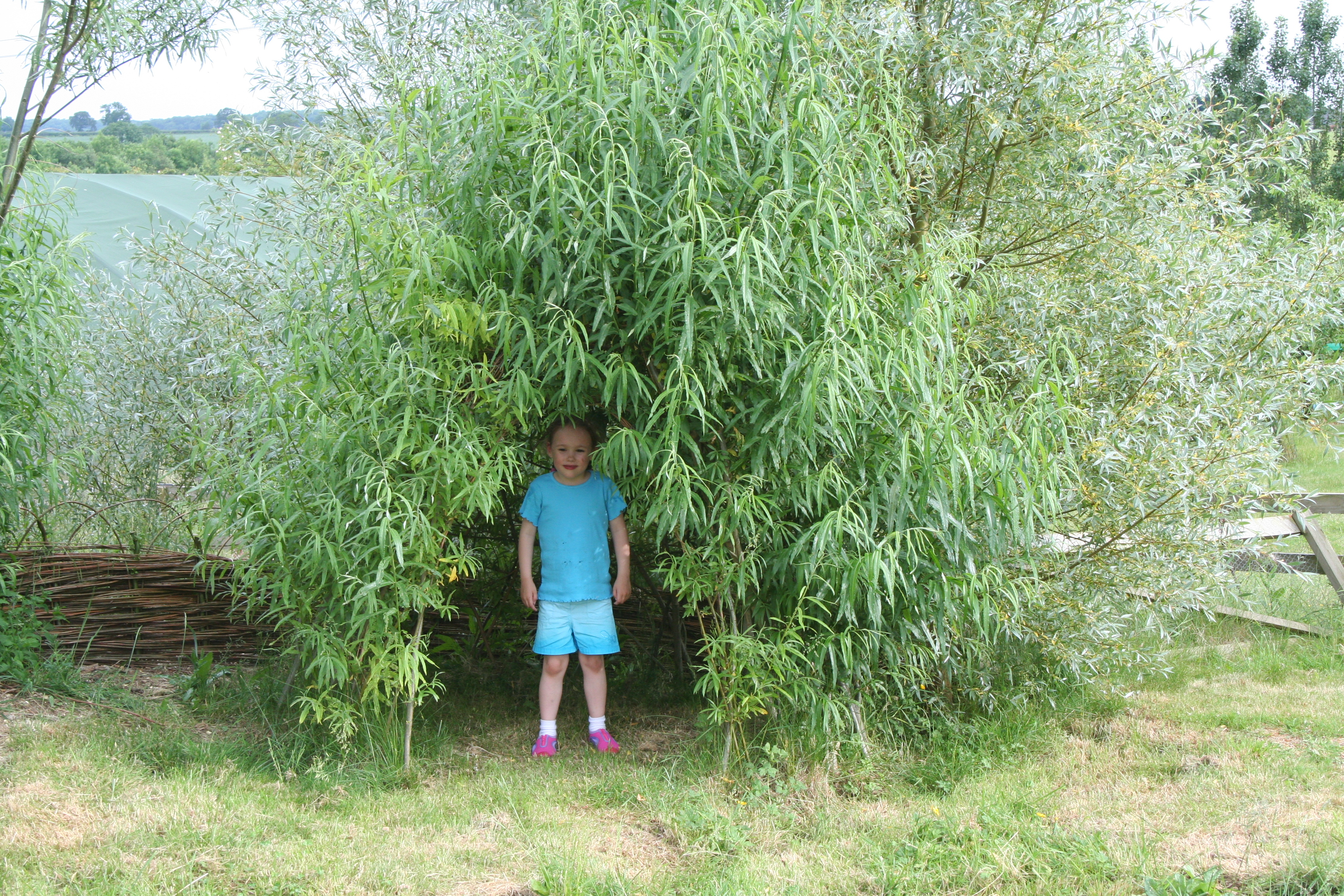 Living Willow Small Dome Kit Wk112 Willows Nursery