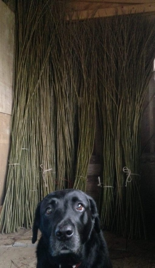 Sorted long willow whips at Willows Nursery