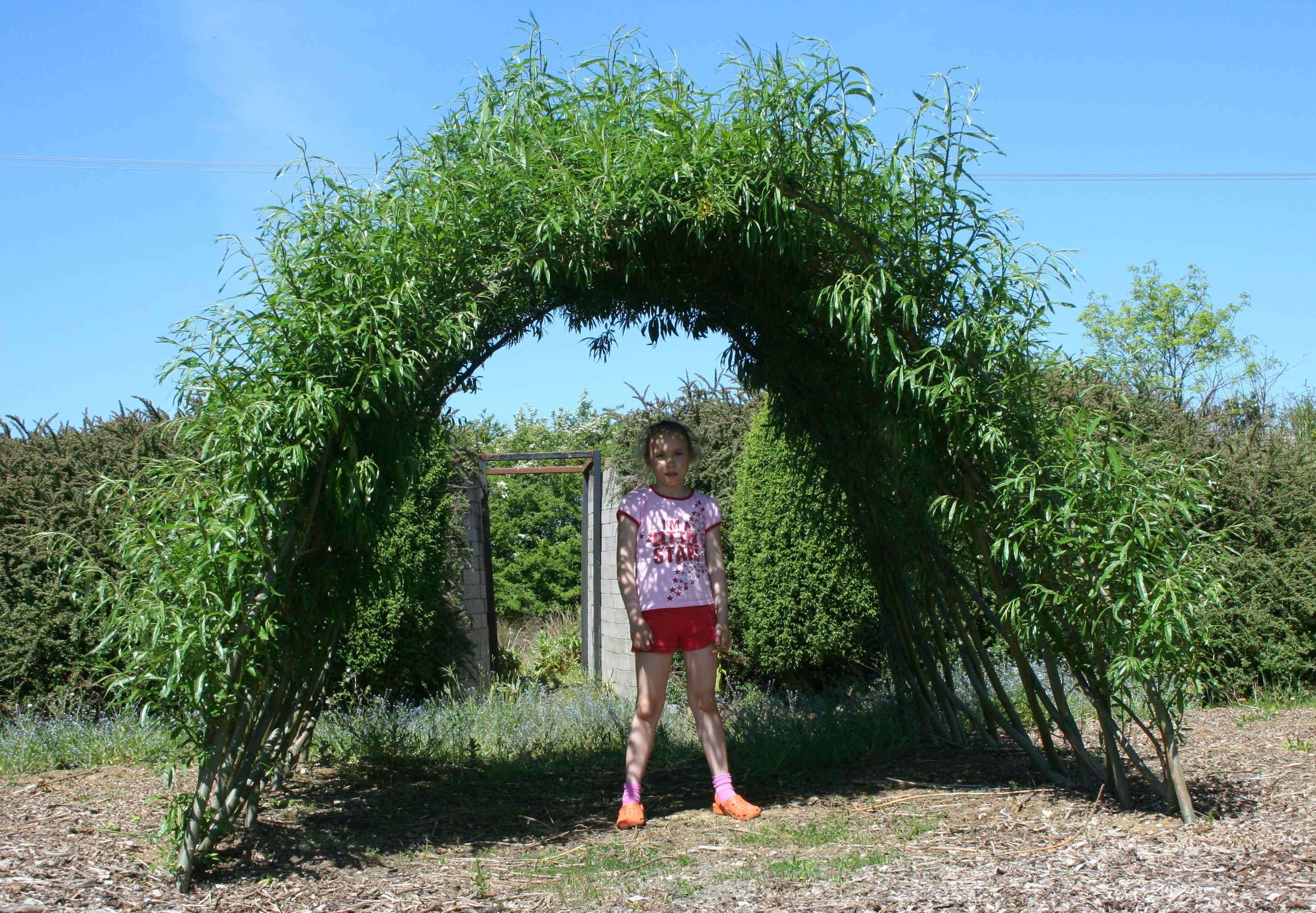 Living Willow Kit Prices - Willows Nursery