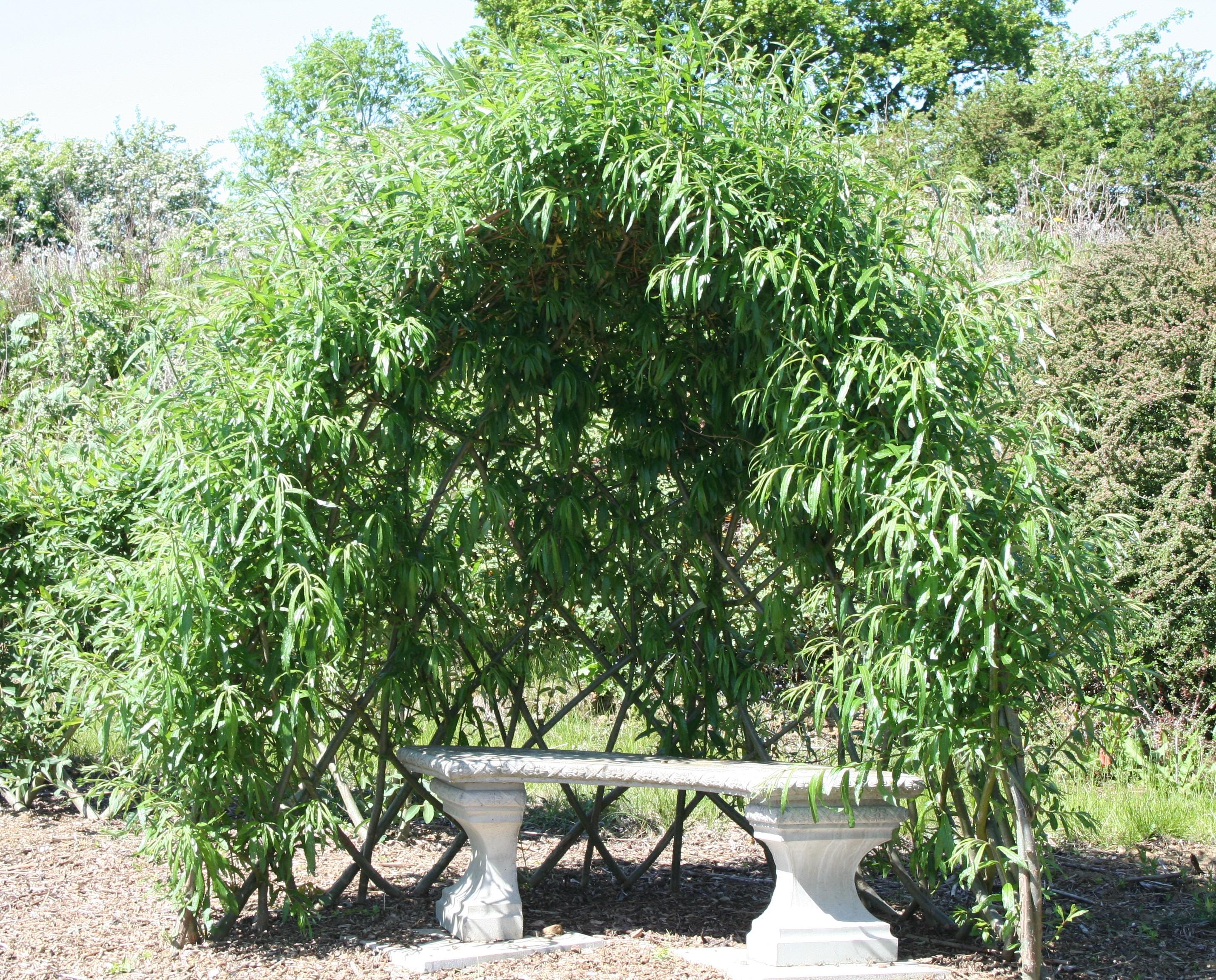 Large Living Willow Half Bower Kit