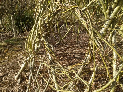 Create your own living willow structure designs with long whips from Willows Nursery.