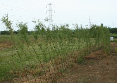 A Living Willow Fedge C Kit joined to Standard Tunnel Kit at Willows Nursery
