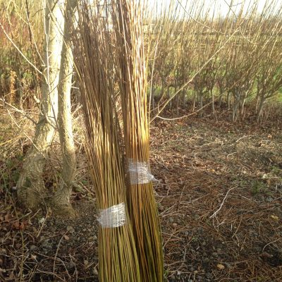 Mixed 3 to 5 ft 'dead' bundle from Willows Nursery