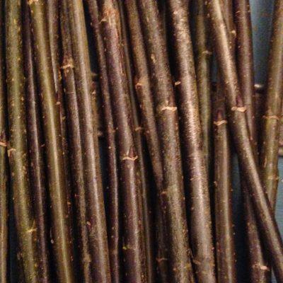 """Salix Triandra """"Black Maul"""" - W778"""