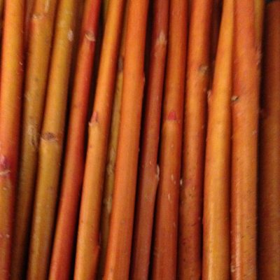 Salix Alba Britzensis (Coral Bark Willow) Mainly grown for the bright orangey/red stem colour as winter interest. They should be cut back annually in the spring to obtain the brightly coloured fresh growth. Usually the new stem growth will reach at least 6 ft long in one season.
