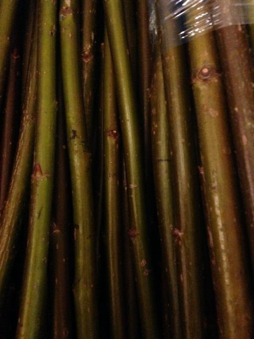 Salix Fragilis (Crack Willow) - W790