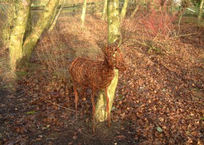 Woven willow deer at Willows Nursery. Woven willow bulrush decorations using corn dolly weave at Willows Nursery. Buy willow to make.