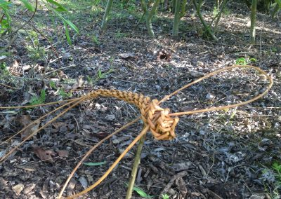 Easy willow weaving project. Dragonfly at Willows Nursery.