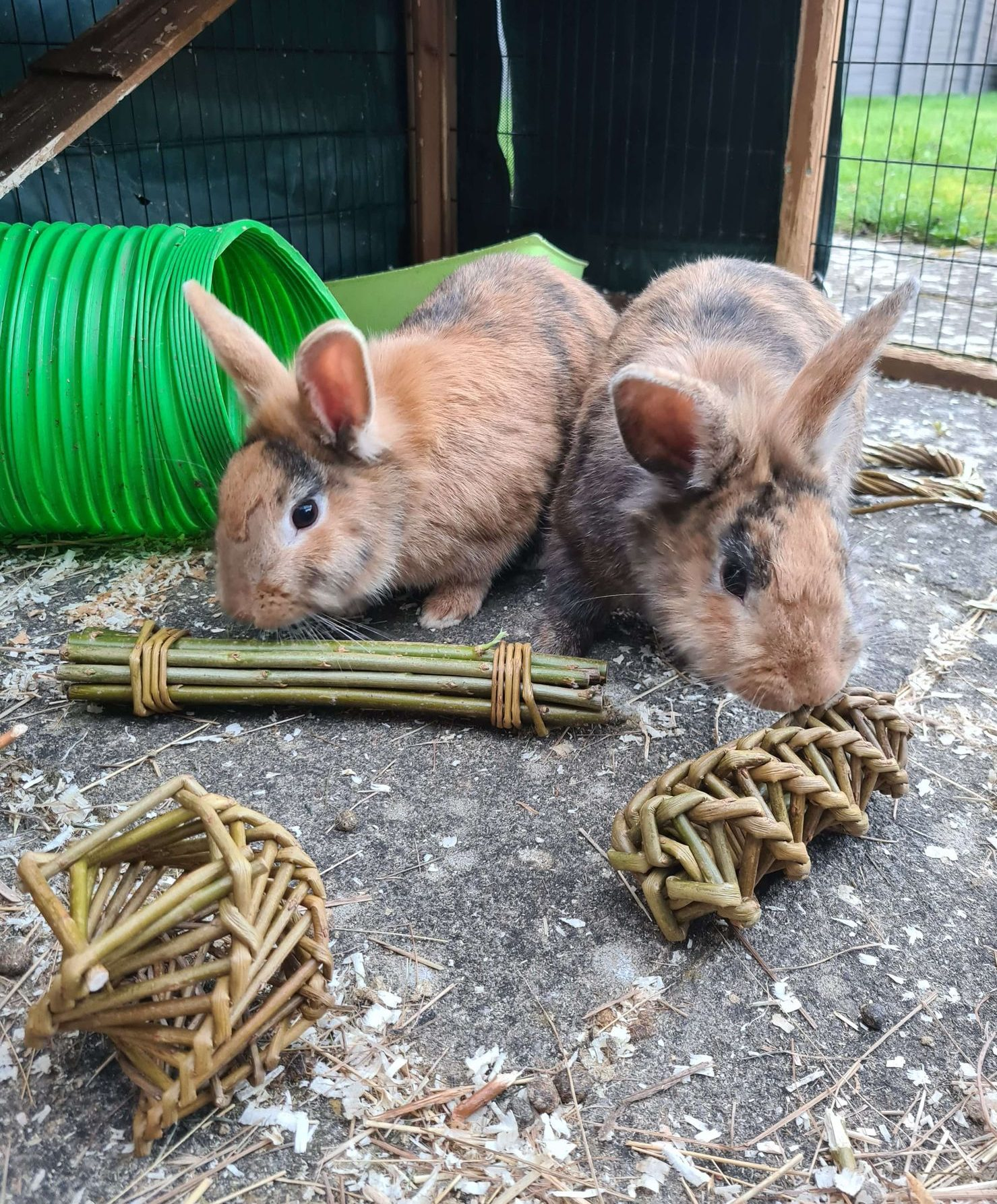willow toys being enjoyed by rabbits