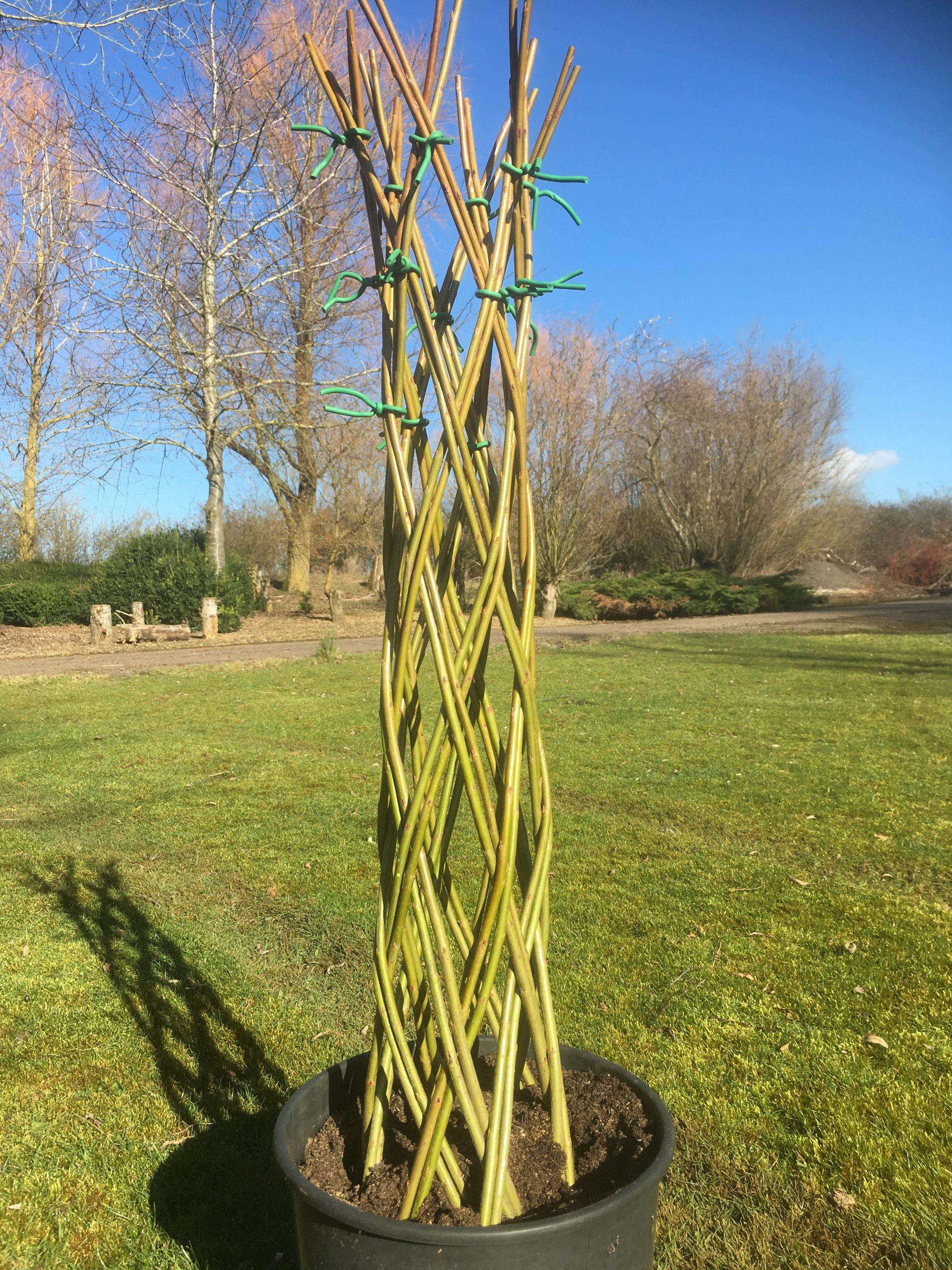 Braided Harlequin willow tree kit