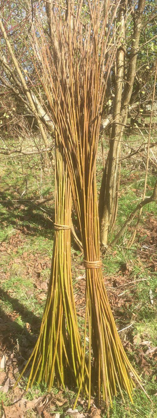 Buy weaving willow