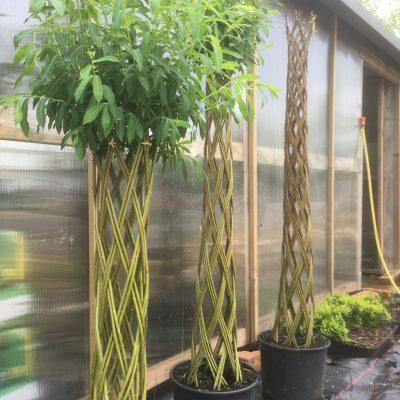 Braided Harlequin Willow Tree Kits
