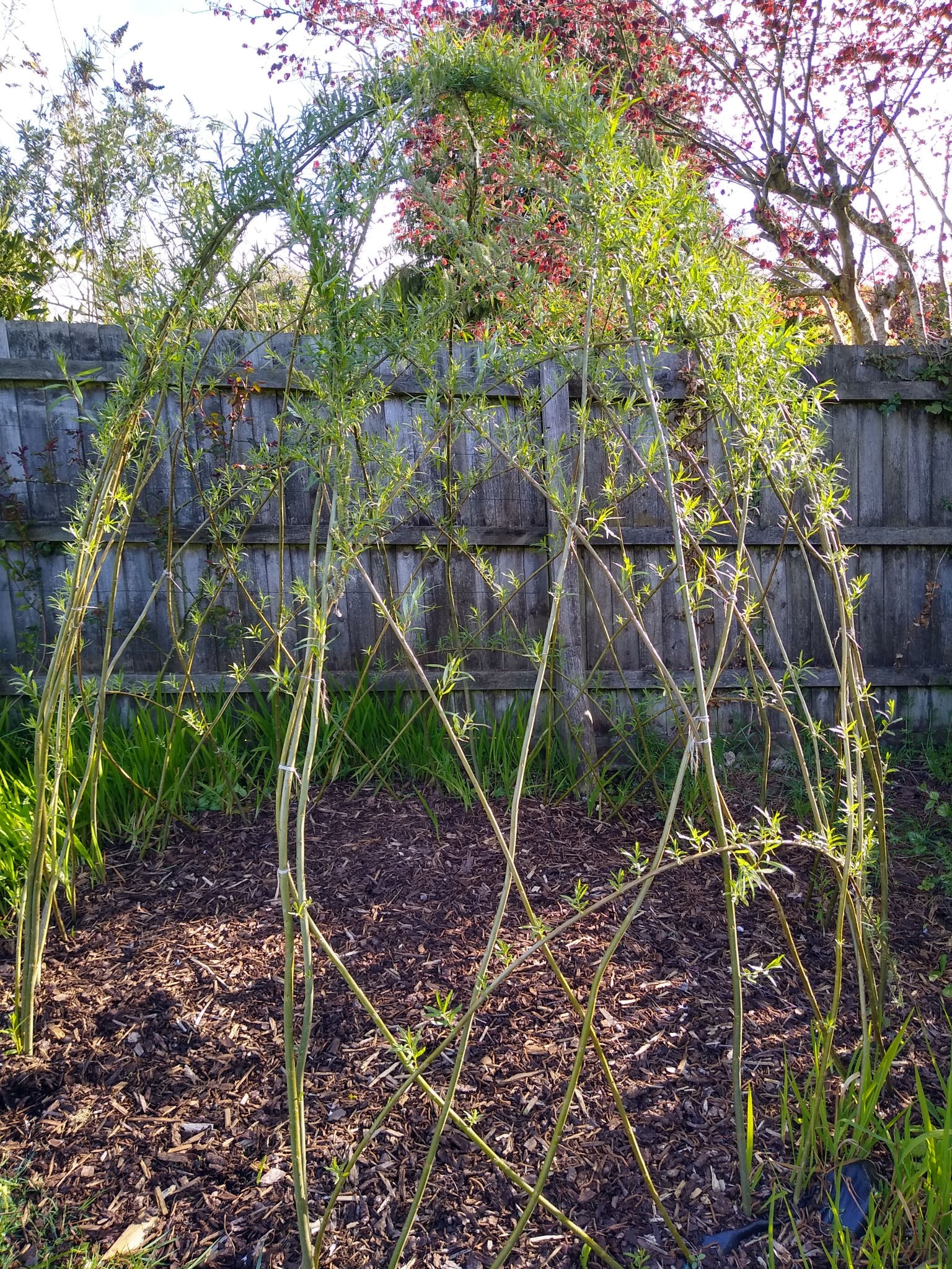 Large Dome Bower kit from willows nursery planted by customer