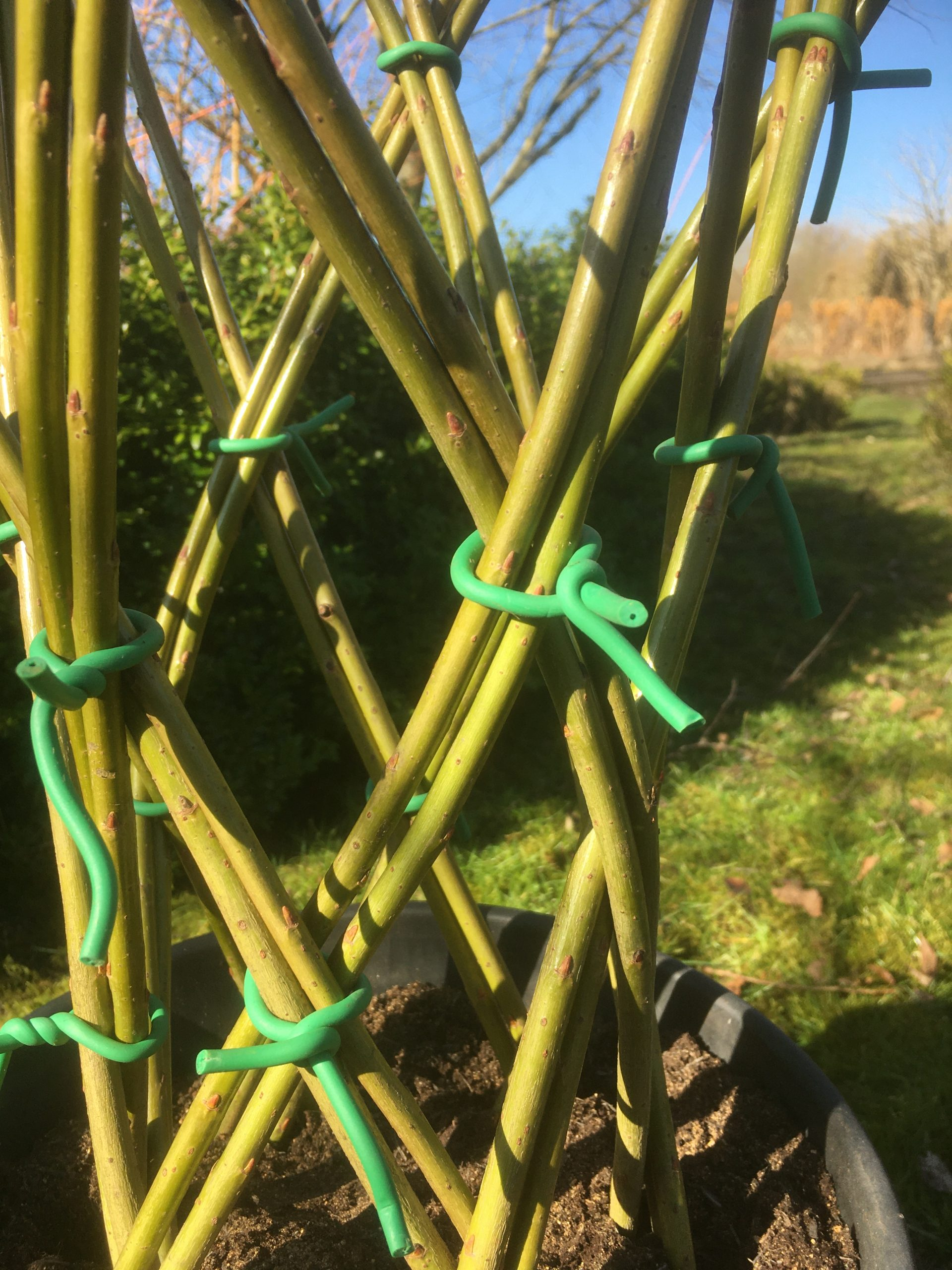 How to make a harlequin braided willow tree